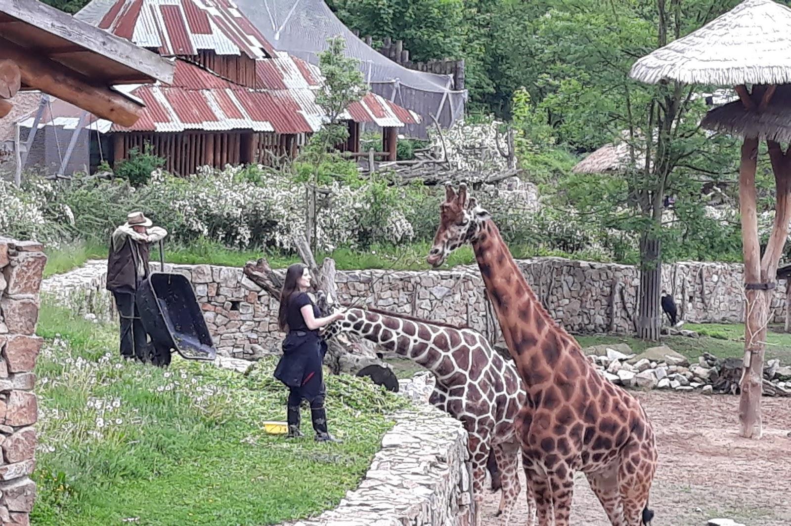 Jihlavská zoo zavírala pokladny, dodržela povolený počet lidí